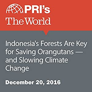 Indonesia's Forests Are Key for Saving Orangutans — and Slowing Climate Change