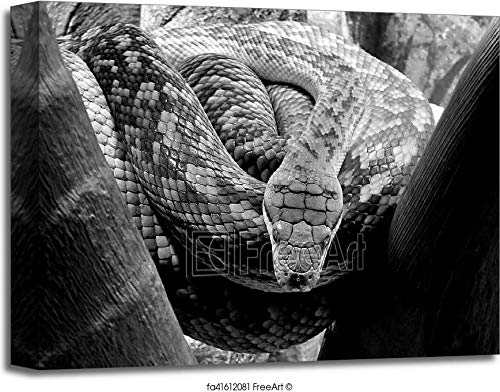 (Pythonidae Python Snake Gallery Wrapped Canvas Art (16in. x 20in.))