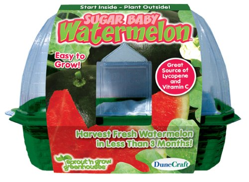 DuneCraft Sprout 'n Grow Greenhouses Sugar Baby Watermelons by DuneCraft (Image #2)