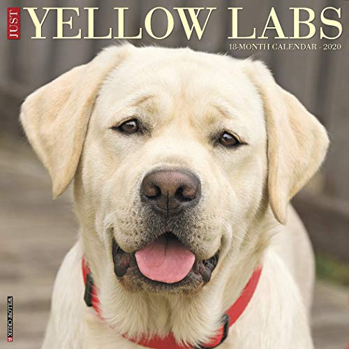 (Just Yellow Labs 2020 Wall Calendar (Dog Breed Calendar))