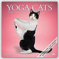 Yoga Cats 2016 Square 12x12 Wall Calendar