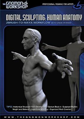 Amazon com: Digital Sculpting: Human Anatomy: ZBrush-to-Maya
