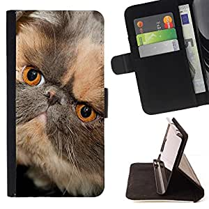 Momo Phone Case / Flip Funda de Cuero Case Cover - Persa de pelo corto hocico corto del gato; - Apple Iphone 4 / 4S