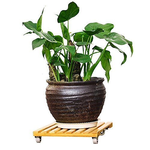 - RAIN QUEEN Natural Bamboo Plant Stand, Movable Outdoor Plant Caddy - Indoor Plant Dolly, Square Plant Roller with Wheels, Holds Potted Containers up to 10 inches and 80 lbs 10