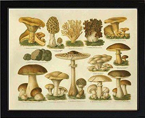 edible mushroom poster