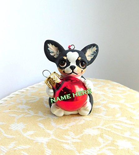 Tri Chihuahua - 2