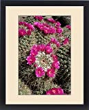 Framed Print of Mammillaria standleyi, Standley s Pincushion Cactus