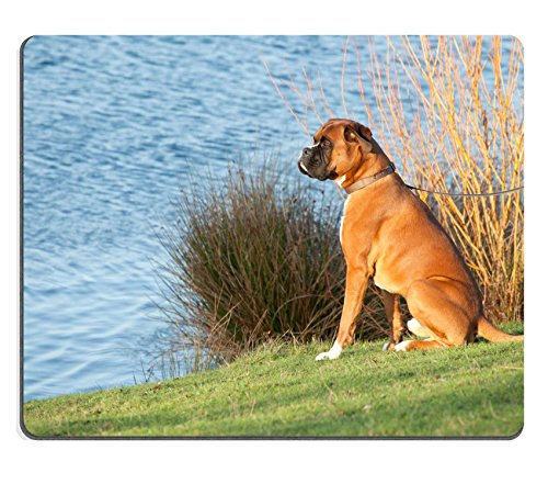 Price comparison product image Liili Mouse Pad Natural Rubber Mousepad Boxer dog sitting by a lake Image ID 21773652