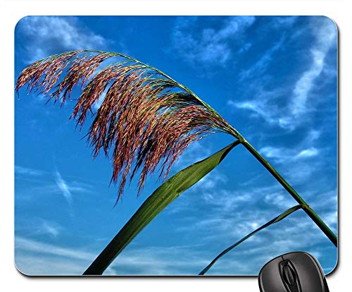 Mouse Pad - Plant Waterplant Reed Stem Plume Summer