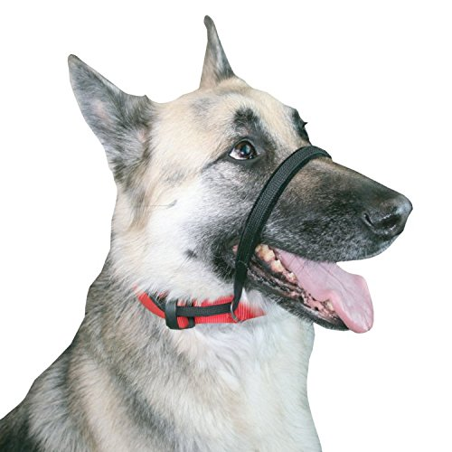SPORN  Head Dog Halter, Black, Large