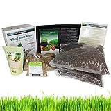 Living Whole Foods Hydroponic Organic Wheatgrass Growing Kit + Tornado (AKA: Back to Basics) Stainless Steel Manual Wheat Grass Juicer
