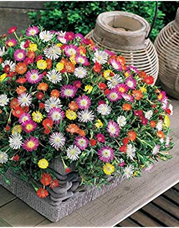 1 g-Herbes et fleurs 50 espèces de graines Anti Moustique mix