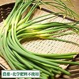 【国産】 【有機】 【無農薬】 ニンニクの芽(冷凍) (150g)