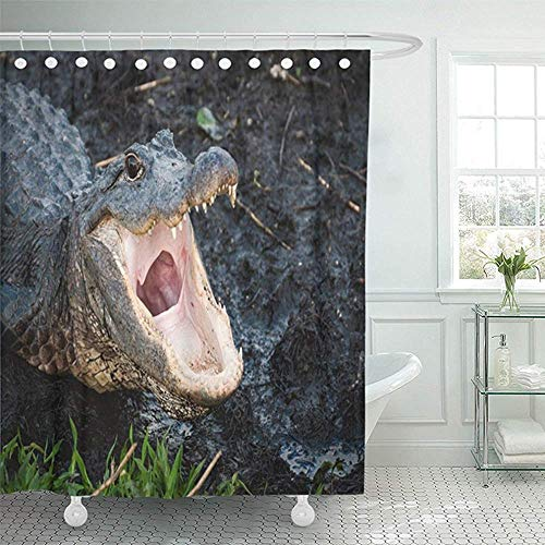 Florida Gators Shower Curtain