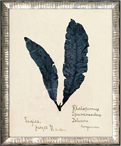 (Maxxi Designs No.2 Capistrano Seaweed Framed Artwork Saudi Blue in a Hand-Applied Leaf Frame, 11