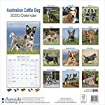 Australian Cattle Dog Calendar - Dog Breed Calendars - 2019 - 2020 Wall Calendars - 16 Month by Avonside (Multilingual Edition) 3