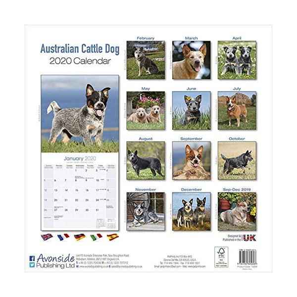Australian Cattle Dog Calendar - Dog Breed Calendars - 2019 - 2020 Wall Calendars - 16 Month by Avonside (Multilingual Edition) 1