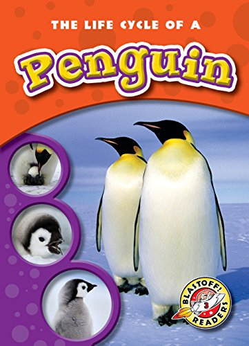 The Life Cycle of a Penguin (Paperback) (Blastoff! Readers: Life Cycles) (Life Cycles: Blastoff Readers, Level 3)