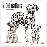 Dalmatians 2018 12 x 12 Inch Monthly Square Wall Calendar, American Dog Breeds (Multilingual Edition)