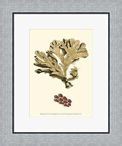 Jewels of the Sea I by Frederick P. Nodder Framed Art Print Wall Picture, Flat Silver Frame, 18 x 21 inches - Nodder Jewels