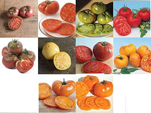David's Garden Seeds Collection Set Tomato Indeterminate Rainbow of Colors OW4050 10 Varieties (Multi) 500 Seeds (Non-GMO, Organic, Heirloom)