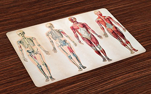 Ambesonne Human Anatomy Place Mats Set of 4, Vintage Chart of Body Front Back Skeleton and Muscle System Bone Mass Graphic, Washable Fabric Placemats for Dining Room Kitchen Table Decor, Ruby Cream