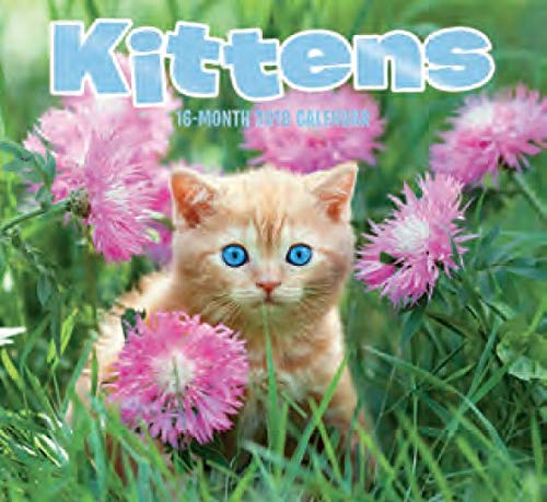 16 Month Wall Calendar 2019: Kittens - Each Month Displays Full-Color Photograph. September 2018 to December 2019 Planning Calendar