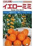 イエローミミ カネコのミニトマト種です