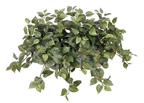 House of Silk Flowers Artificial Pothos in White-Wash Wood Ledge