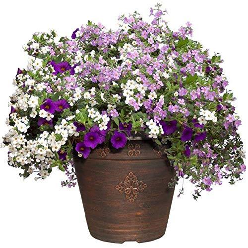 Cyppressshop Outdoor Planting Patio Garden Planter Pot Flowers Gardening Plants Copper Color Medley Plastic Backyard Decorations