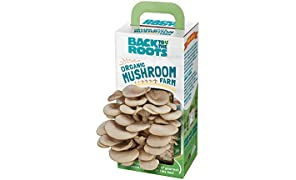 Back To The Roots Organic Mushroom Growing Kit, Harvest Gourmet Oyster Mushrooms In 10 days, One of 2018's Top Holiday Gifts, Gardening Gifts, Teachers Gifts, Science Gifts & Unique Gifts