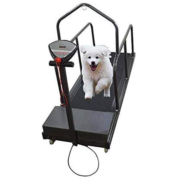 Cinta de correr para perros Equipo de ejercicio para mascotas para ...
