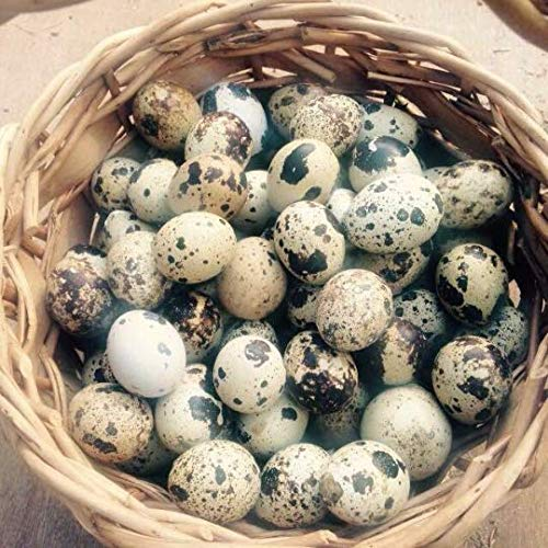 Fresh Quail Eggs for sale  Delivered anywhere in USA