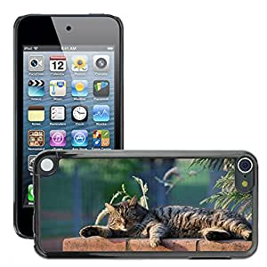 GoGoMobile Slim Protector Hard Shell Cover Case // M00119479 Cat Snoozing Flat Sole // Apple ipod Touch 5 5G 5th