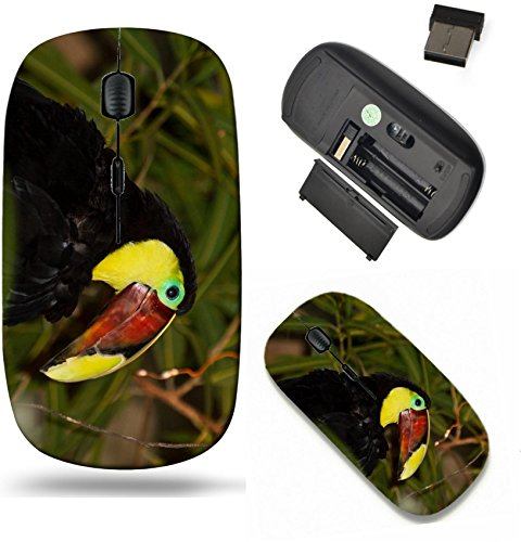 Liili Wireless Mouse Travel 2.4G Wireless Mice with USB Receiver, Click with 1000 DPI for notebook, pc, laptop, computer, mac book The Chestnut mandibled Toucan or Swainson Toucan ()