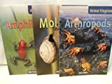 Amphibians, Sally Morgan, 1410913422