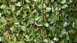 Cheap Verseo Faux Ivy Greenery Yard Decoration, Ivy Hedge Privacy Screen, Expandable 2-Pack