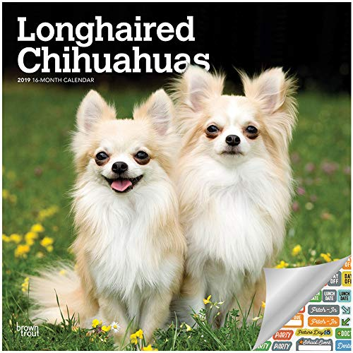 Longhaired Chihuahuas Calendar 2019 Set - Deluxe 2019 Longhaired Chihuahuas Wall Calendar with Over 100 Calendar Stickers (Longhaired Chihuahuas Gifts, Office Supplies)