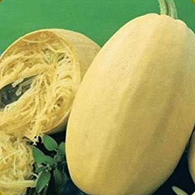 Everwilde Farms - Organic Vegetable Spaghetti Winter Squash Seeds - Gold Vault