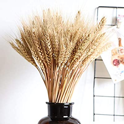 Amazon Wedding Decorations Dried Wheat Sheaves100pcs Natural