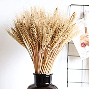 Wedding Decorations Dried Wheat Sheaves,100pcs/50pcs Natural Wheat Bouquet Bunch Stalk Bundle,Bride and Groom Holding Flowers,DIY Home Kitchen Table Wedding Centerpieces 110