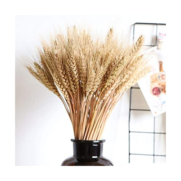 Wedding-Decorations-Dried-Wheat-Sheaves100pcs-Natural-Wheat-Bouquet-Bunch-Stalk-BundleBride-and-Groom-Holding-FlowersDIY-Home-Kitchen-Table-Wedding-Centerpieces-a