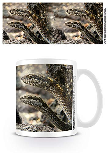 1art1 Set: Planet Earth, 2, Racer Snakes Photo Coffee Mug (4x3 inches) and 1x Surprise Sticker