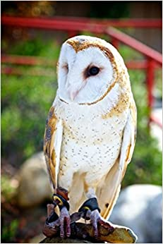 Mind Blowing Common Barn Owl 200 page lined journal: 200 page lined journal