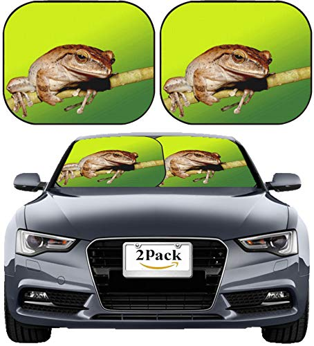 - MSD Car Sun Shade Windshield Sunshade Universal Fit 2 Pack, Block Sun Glare, UV and Heat, Protect Car Interior, Image ID: 10343218 White lipped Tree Frog Stay on Branch in Summer at Night
