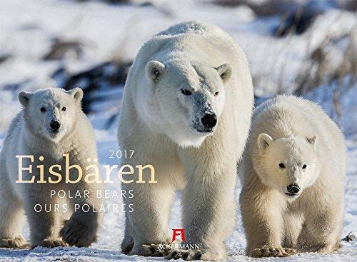 Eisbären 2017