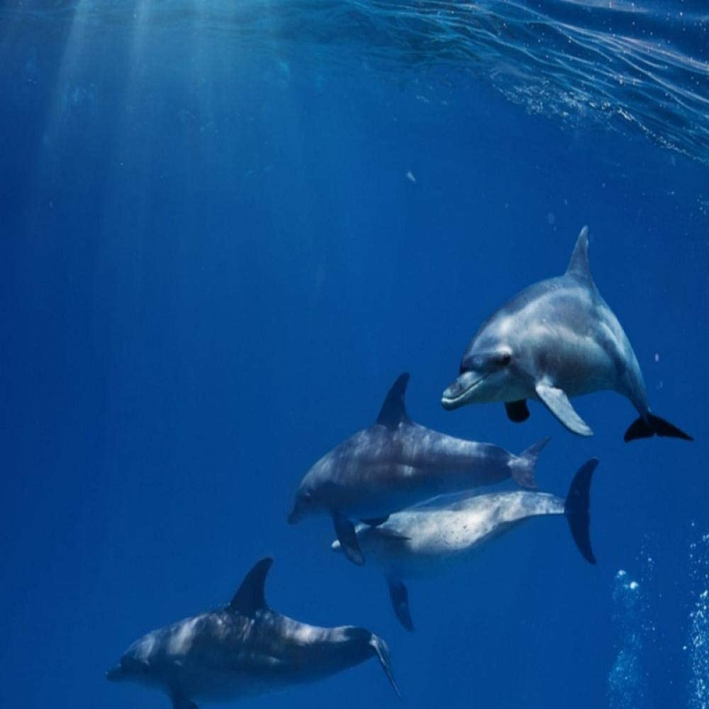 Amazon Ljunj 青い壁紙シンプルな深海底イルカ海洋生物壁紙キッズウォール壁画3d 400x280cm 壁紙
