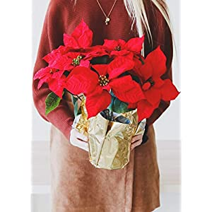 """Afloral Pet Friendly Potted Silk Red Poinsettia in Gold Foil - 17"""" Tall 68"""