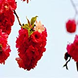 Hot Selling! 10 PCS Red Japanese cherry blossoms