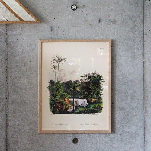 Botanical Palm Print OAK FRAME ボタニカルパームプリントオークフレーム W50×H70cm(ポスター別売り) B076HKPCXF